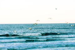 Crashing Blue Waves and Sea Gulls Along the Coast of Florida Beaches in Ponce Inlet and Ormond Beach, Florida royalty free stock photo