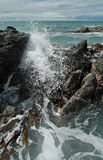 Crashing Waves, Rocks & Kelp. Pure blue Pacific ocean waves crash on the rocky shores of the Kaikoura Seal colony, New Zealand Stock Image