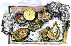Crassostrea virginica. Half a dozen Oysters on in wooden box on aluminum foil with a lemon and ice. Some oysters already opened Royalty Free Stock Photography