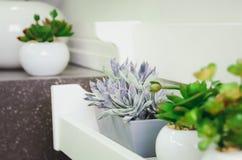 Crassula decorativa della pianta da appartamento immagini stock