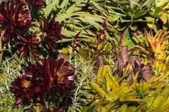 Crassulacee e cactus Fotografia Stock