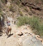 Cratère Ethiopie de gazon d'EL Photos libres de droits
