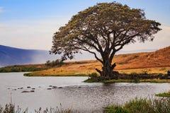 Cratère de Ngorongoro en Tanzanie Photographie stock