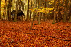 Cratch in autumn forest Royalty Free Stock Photos