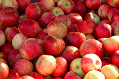 Crate of Apples Royalty Free Stock Photography