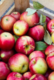 Crate of apples Royalty Free Stock Photo
