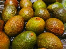 Avocado`s just filled in the supermarket royalty free stock images