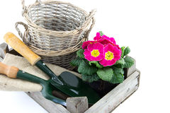 Crate with baskets, primrose and garden utensils Royalty Free Stock Photography