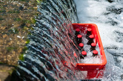 Crate of beer in a cool creek. Crate of beer in a cool mountain creek Royalty Free Stock Images