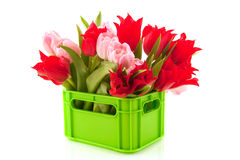 Crate with colorful tulips Royalty Free Stock Photos