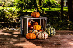 Crate filled with mini pumpkins angled outdoors Stock Image