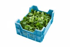 Isolated crate with Corn Salad or lamb`s lettuce. Crate filled with organically grown Corn Salad - valerianella locusta - isolated on a white background. Other stock photo