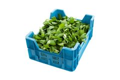 Isolated crate with Corn Salad or lamb`s lettuce. Crate filled with organically grown Corn Salad - valerianella locusta - isolated on a white background. Other royalty free stock photo