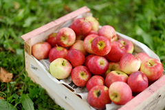 Crate of fresh ripe apples on green grass Stock Photography