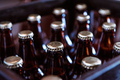 Crate of Freshly Bottled Beer Stock Images