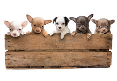 Crate full of dogs Stock Image