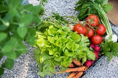 Crate full of freshly harvested vegetables in a garden. Homegrown bio produce concept. Top view. Stock Photos