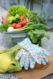 Crate full of freshly harvested vegetables, straw hat and gloves in a garden. Homegrown bio produce concept. Top view Royalty Free Stock Photos