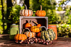 Crate full of mini pumpkins and chestnuts Stock Photos