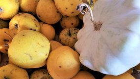 Yellow apples and white pumpkin, autumn harvest royalty free stock photography