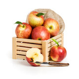 Crate with Jonagold Apples Stock Image