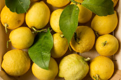 Crate of lemons, close up. Wooden crate of organic lemons with leaves, close up view Stock Image