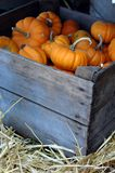 Crate of Mini Pumpkins. An old wooden crate filled with decorative mini orange pumpkins Stock Photo