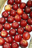 Crate of nectarines Royalty Free Stock Photography