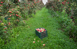 Crate in orchard Stock Images