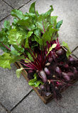 A Crate Of Organic Grown Beetroot Stock Photography