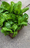 A Crate Of Organic Grown Rainbow Chard Stock Photos
