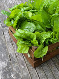A Crate Of Organic Grown Rainbow Chard Royalty Free Stock Images