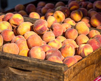 Crate of peaches. An old wooden crate filled with ripe peaches on a sunny day Stock Photography