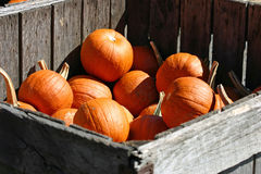 Crate of Pumpkins Royalty Free Stock Photo