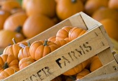 Crate of pumpkins Stock Photo