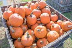 Crate of pumpkins stock photography