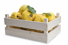 Crate with quinces. Crate with premium fresh quinces freshly harvested to cook Royalty Free Stock Photography