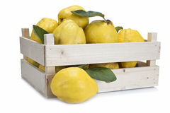 Crate with quinces Stock Photos