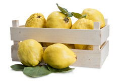 Crate with quinces. Crate with premium fresh quinces freshly harvested to cook Royalty Free Stock Image