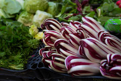 Crate of radicchio di treviso purple salad at an Italian farmers market. Fresh purple radicchio on display at the farmers market. Royalty Free Stock Image
