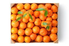 Crate of ripe tangerines. Top view. Royalty Free Stock Image