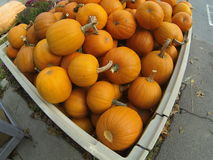 Crate of small pumpkins Stock Images