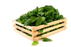 Crate with spinach Stock Image