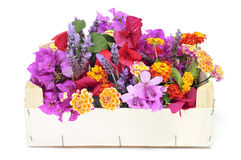 Crate with spring flowers Royalty Free Stock Photo