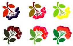 cratego Cratego con le foglie Illustrazione dell'acquerello su fondo bianco illustrazione di stock