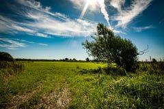 Cratego nell'agricoltura del paesaggio Immagine Stock