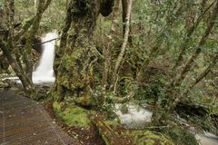Crater Falls in Cradle Mountain. Beautiful Crater Falls in Cradle Mountain, Tasmania royalty free stock photography