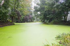 Crater from first world war filled with green water. Stock Photos