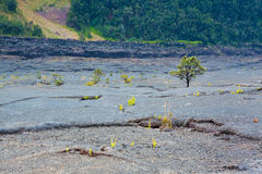 Crater floor Royalty Free Stock Photos
