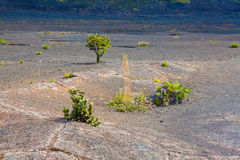 Crater floor Royalty Free Stock Image